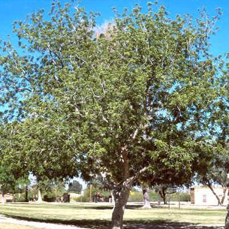 tree-care-blog