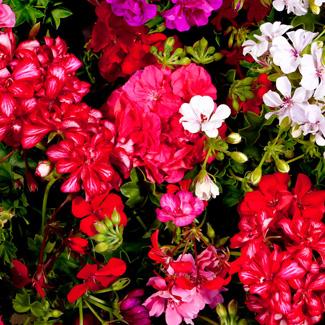 winter-plants-blog