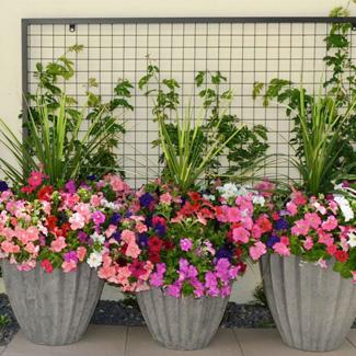 plantsblog