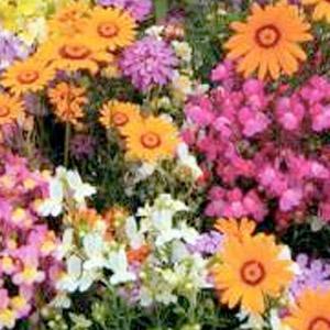 annuals-perennials
