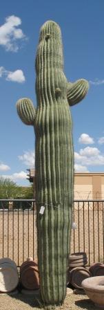 2800.00 Saguaro
