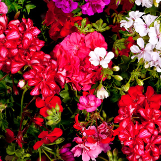Best Winter Plants For Phoenix Green Goddess