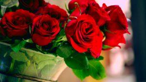 Roses - Gardening